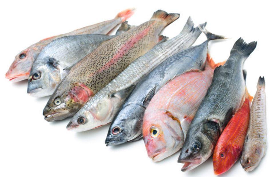 Pescados de verano