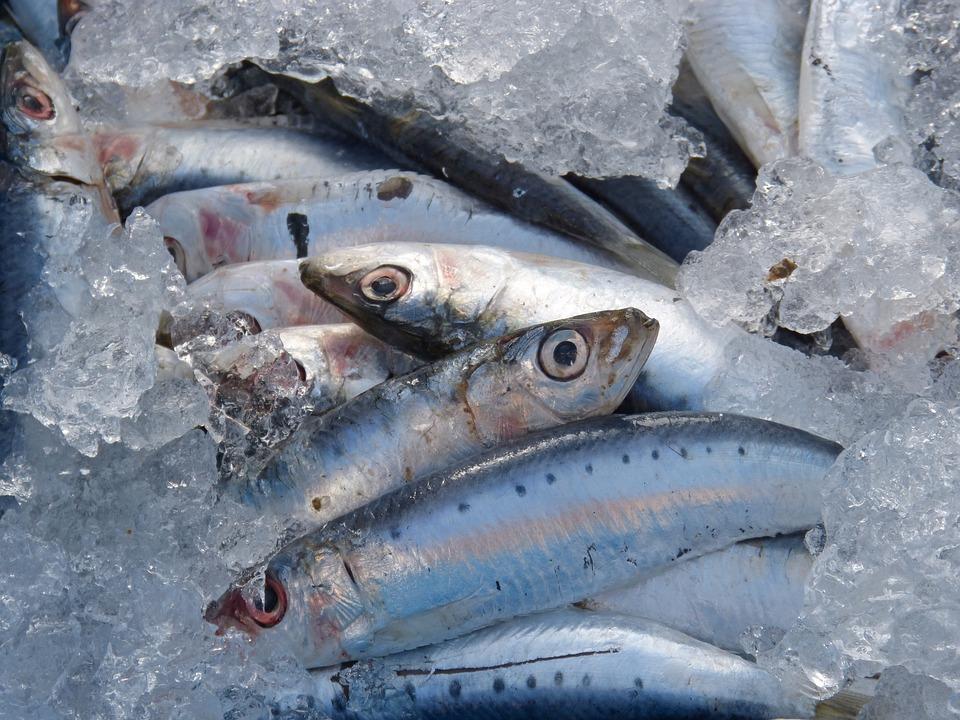 Los beneficios de los aceites de pescado con Omega-3