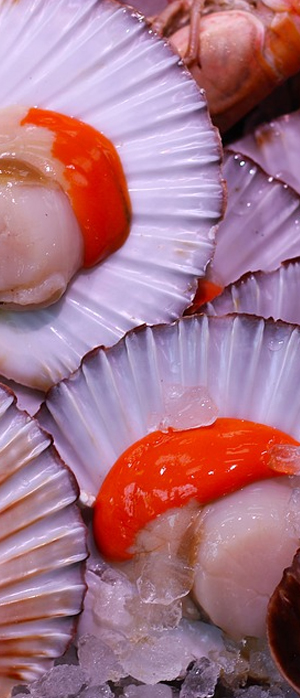 Marisco Moluscos pescaderia charo